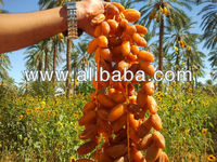 dates deglet nour of algeria