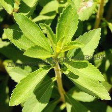 High Quality Food Grade Bulk Pure Stevia Extract