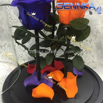 2017 New design good quality preserved roses big size in glass preserved rose flowers