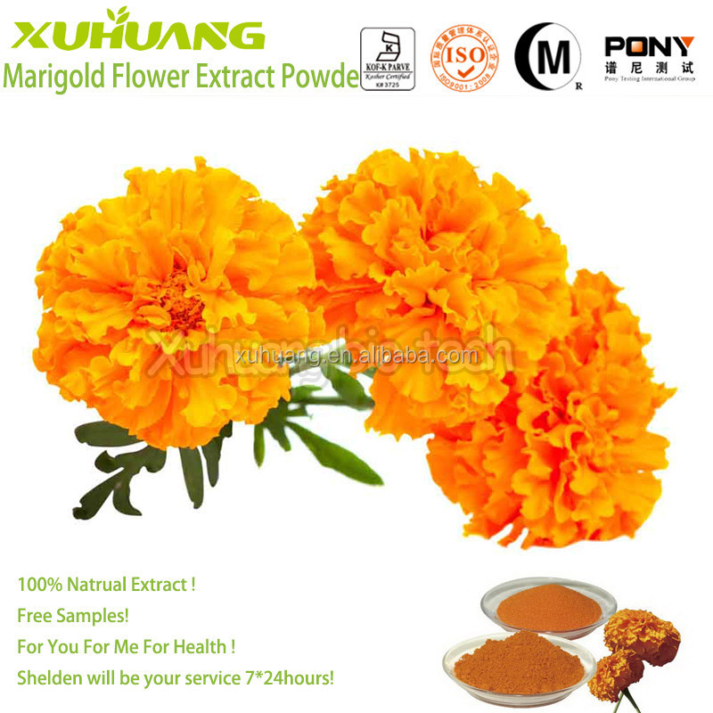 High Quality Kosher Halal ISO 9001 Free Samples Good water solubility Flower Marigold P.E.
