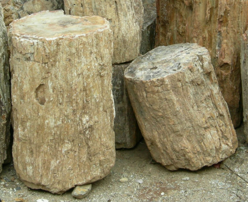 Petrified Wood logs from Madagascar