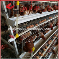 (Trade Assurance) Pyramid Chicken Cage Plans For 5000, 10000, 15000, 20000 Birds