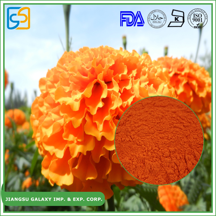 Top quality plant extract powder lutein from marigold flower
