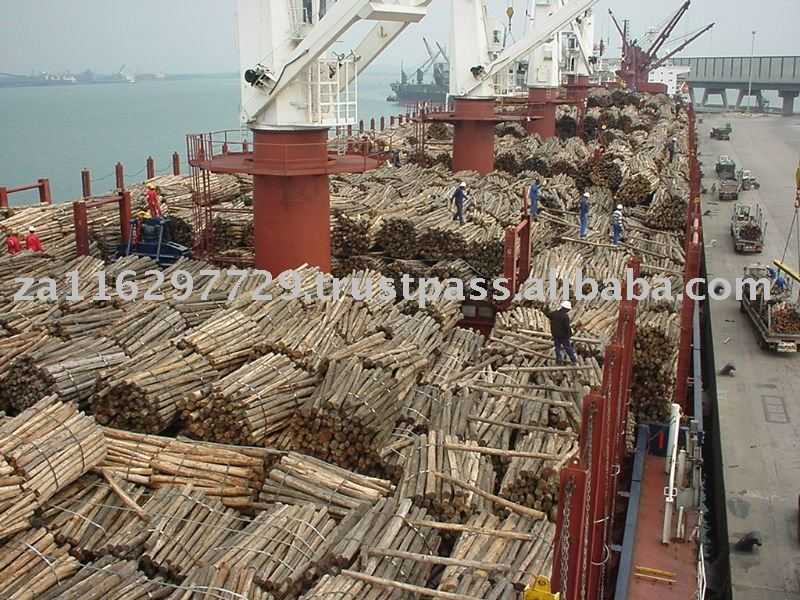 Eucalyptus pulp logs for wood chips
