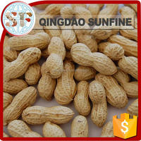Red coral roasted peanuts in shell price