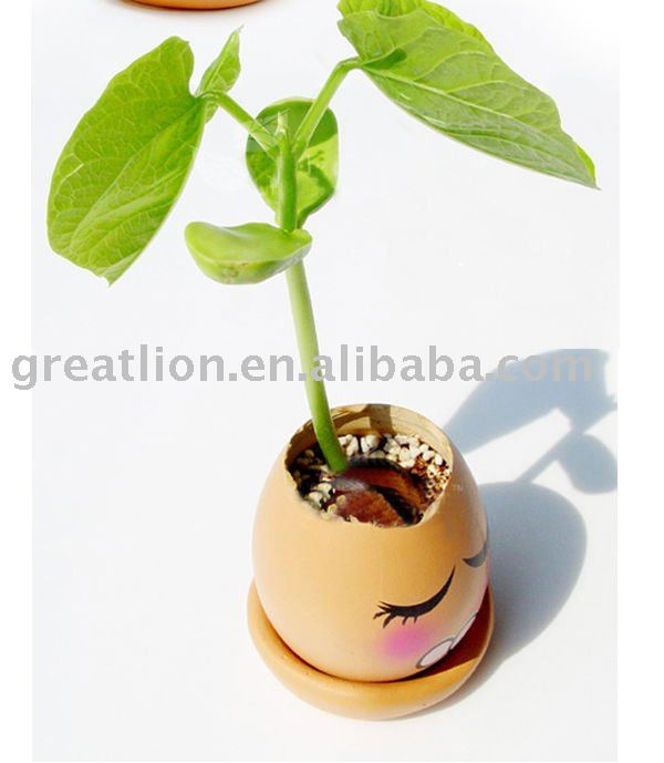 magic bean, magic egg, mini plant