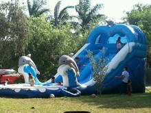 Commercial grade inflatable water slide with dolphin pool