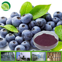 10:1 20:1 acai berry extract powder halal acai berry