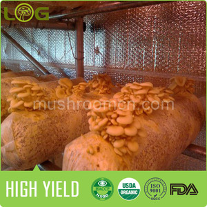 wholesale and retail buyer for white oyster mushroom spawn