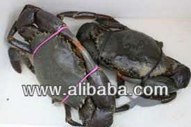 Live mud crab & All types of Fish