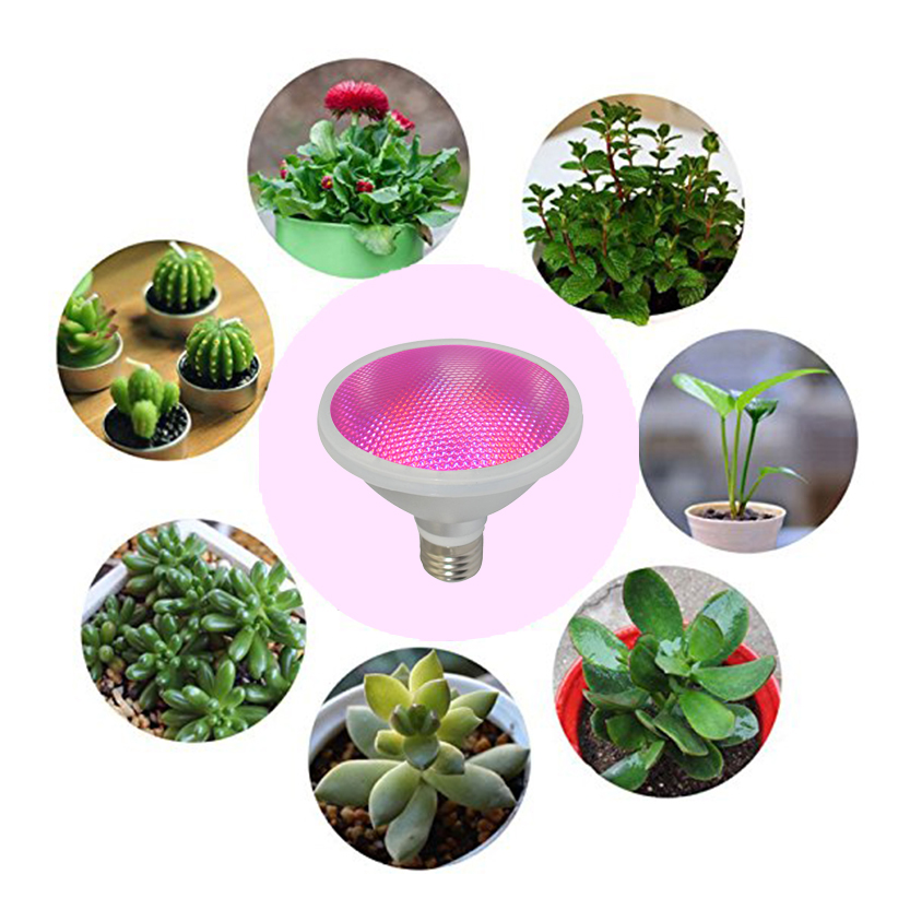 E26E27B22 Horticultural Led Par38 Full Spectrum Led Spot Grow Light For Lettuce Greenhouse Vegetables