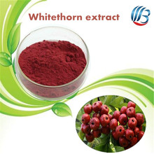 LanBing supply high quality hawthorn berry powder whitethorn fruit hawthorn berry extract