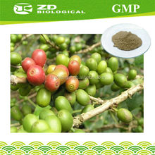 Fat Killer wholesale green coffee bean extract in herbal extract 98% Chlorogenic acid