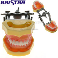 Medical College Teaching Use Plastic Dental Study Model