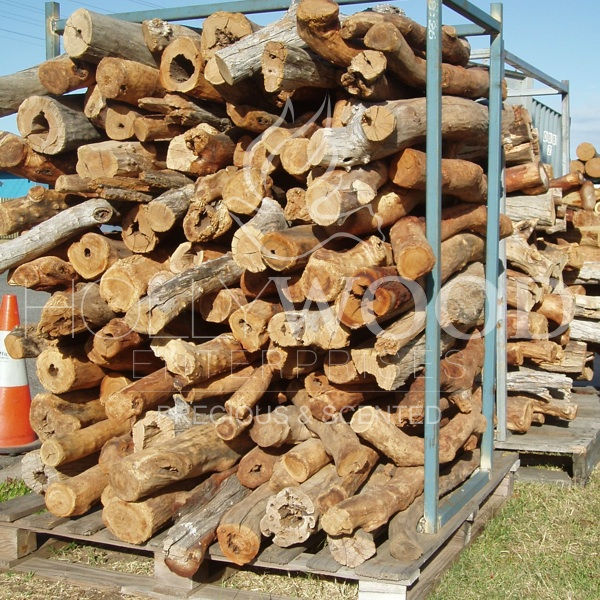 SANDALWOOD LOGS 75% Deadwood Sandalwood (bark-off)