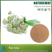 new arrival common yarrow extract Specification:succinic acid 5-13%
