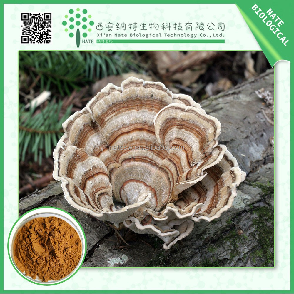 high purity Coriolus versicolor extract polysaccharide krestin 30% FREE Sample