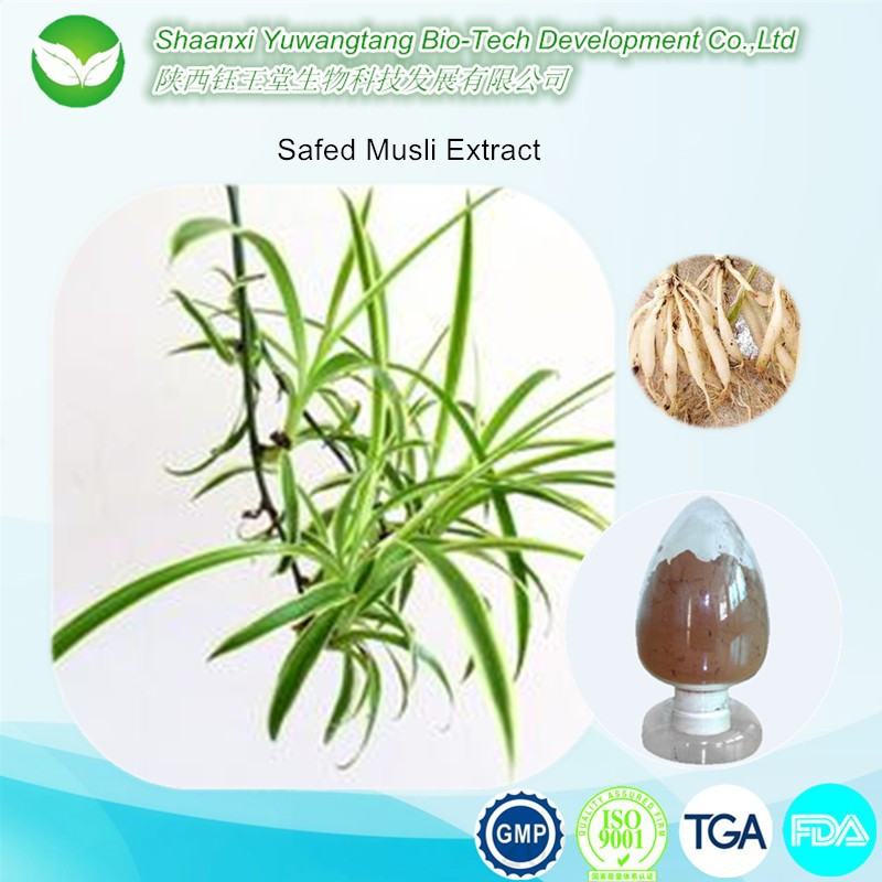 Competitive price supply natural Safed Musli Extract