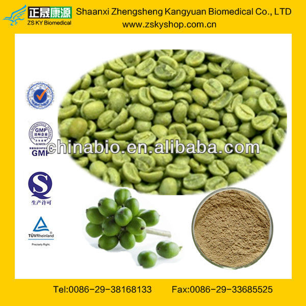 Free Sample Green Coffee Bean Extract Powder from GMP Factory