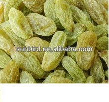 green Raisin / raisin price/dried raisin with low price