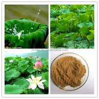 Nuciferine 0.3-10%HPLC Lotus Leaf Extract