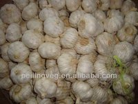 fresh garlic normal white 2013 jining new crop