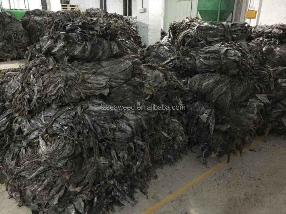 2017 harvest sun dried kelp cut shredded seaweed laminaria for sale