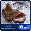 Price of Whole Round Gutted (Lophius Lifulon) Frozen Monkfish