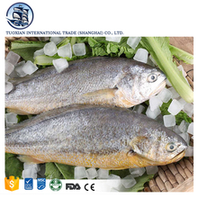 Frozen pacific large yellow croaker fish farming for sale