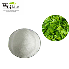Natural pure green tea extract plant extract china