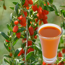 original raw goji berry juice
