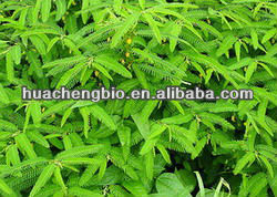 High Quality Cassia Nomame Extract(5:1,10:1,20:1)