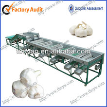 Cherry Tomato sorting machine / fruit vegetable sorting machine in alibaba