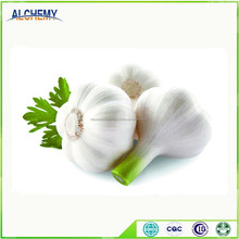 natural fresh garlic /garlic powder /peeled garlic