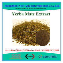 Polyphenols 20% Yerba Mate Extract With Kosher Halal ISO22000 Certificate