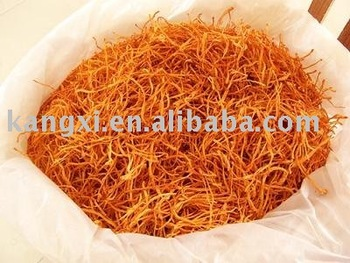 Over 10 years experience for cordyceps mycelium