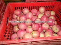 export fresh red delicious apple fruit fresh apple