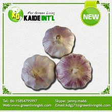 Popular In Netherlands Top Quality Best Selling Products Bulk Fresh China Garlic