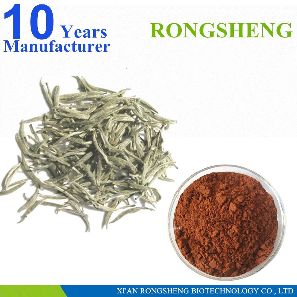 High Quality Natural White Tea Extract