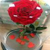 Preserved Rose In Glass Dome From