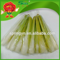 2015 fresh Water bamboo shoot organic green vegetables