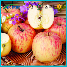 powder production line apple cider vinegar extract