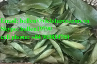 HERBAL : Dried soursop/ graviola leaf, Sabah snake grass, Crinum latifolium, Papaya leaf, Stevia Rebaudiana