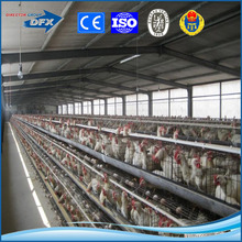 top ranking automatic light steel structure cage feeding chicken house with best price