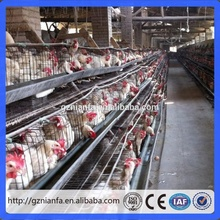 design poultry chicken cage for small farm in Africa(Guangzhou factory)