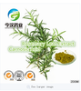Natural Rosemary leaf Extract Manufacturer