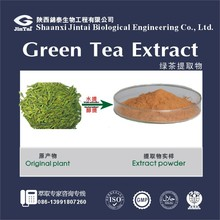 green tea extract 98% tea polyphenol 50% EGCG 80% Catechins powder