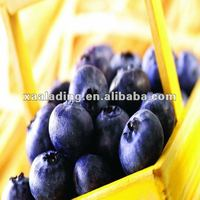 anthocyanin/OPC/Bilberry Extract
