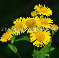 Qi-regulating drugs Inula racemosa Extract Tibet inula root powder Radix Inulae Racemosae