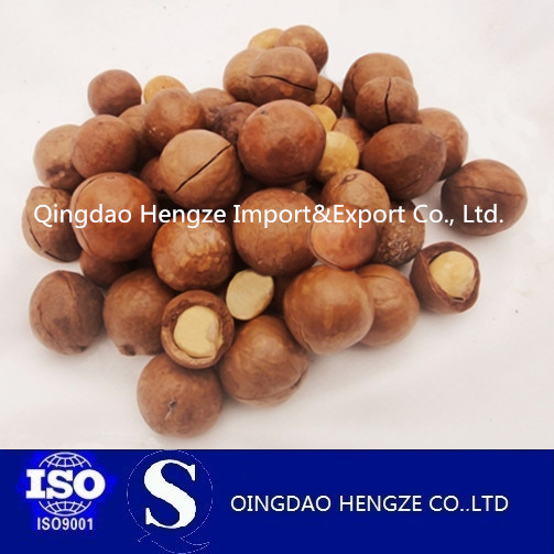 Find Reliable Favorable price of Macadamia nuts/hawaii fruit kernel Buyer
